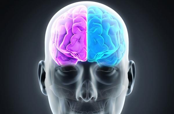 Afinal, qual é a diferença entre o lado direito e o esquerdo do cérebro?