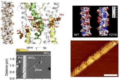 Nanofios de bactérias deixam nanotecnologias humanas na poeira